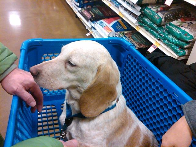 Petsmart Dog Adoption Days